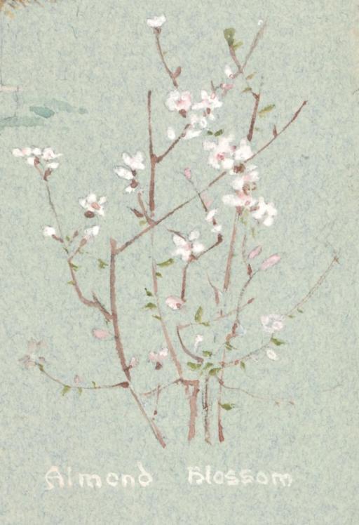 february flower #9