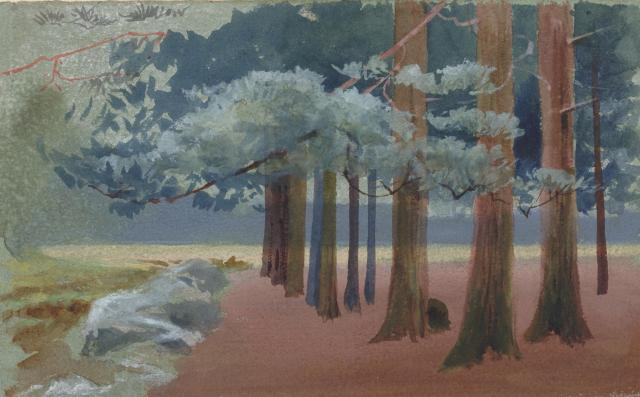 woodland 027